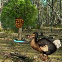 Free online flash games - Dodo Bird Evolution game - WowEscape