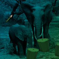Free online flash games - Elephant Forest Escape game - WowEscape