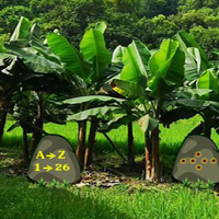 Free online flash games - Escape From Banana Garden game - WowEscape