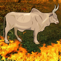 Free online flash games - Fire Forest Bull Escape
