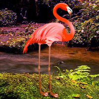 Free online flash games - Flamingo Forest Escape game - WowEscape