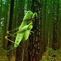 Free online flash games - Grasshopper Forest Escape game - WowEscape