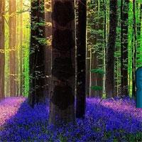 Free online flash games - Lavender Forest Escape game - WowEscape