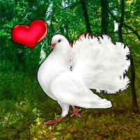 Free online flash games - Love Pigeon Forest Escape