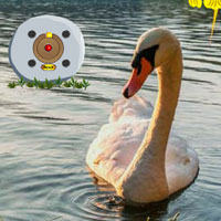 Swan Valley Escape game - Play and Download free online flash games - at WowEscape