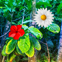 Free online flash games - Tropical Flower Forest Escape game - WowEscape