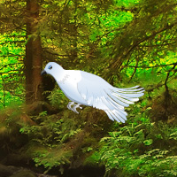 Free online flash games - White Pigeon Forest Escape game - WowEscape