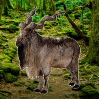 Free online flash games - WowEscape Save the Markhor game - WowEscape