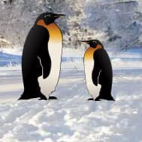 Free online html5 games - penguin snow land escape game