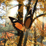 Free online flash games - Hidden Autumn Butterfly game - WowEscape