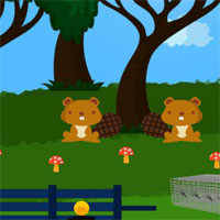 Free online flash games - 8b Tortoise Escape