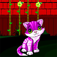 Red Wall Cat Escape Avm