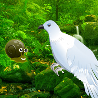 Free online flash games - Green Forest Dove Escape game - WowEscape