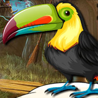 Free online flash games - Avm Cute Toucan Bird Escape