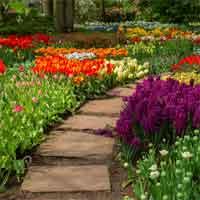 Flower Garden 2 HTMLGames
