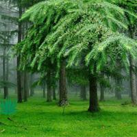 Greeny Forest Hiddenogame…