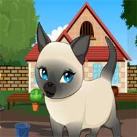 Tonkinese Cat Rescue Game…